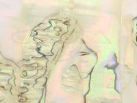 アワビ本舗 アワビシート -  小判 #カリフォルニア/ナチュラル 約34mm×140mm