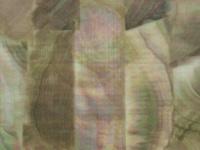 アワビ本舗 アワビシート -  小判 #黒蝶貝/ナチュラル 約34mm×140mm